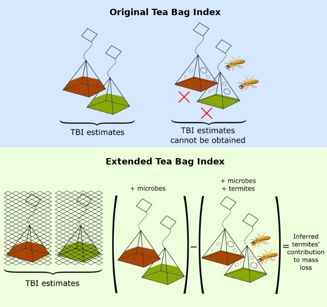 Extended Tea Bag Index to measure microbial- and termite-driven decomposition in the tropics