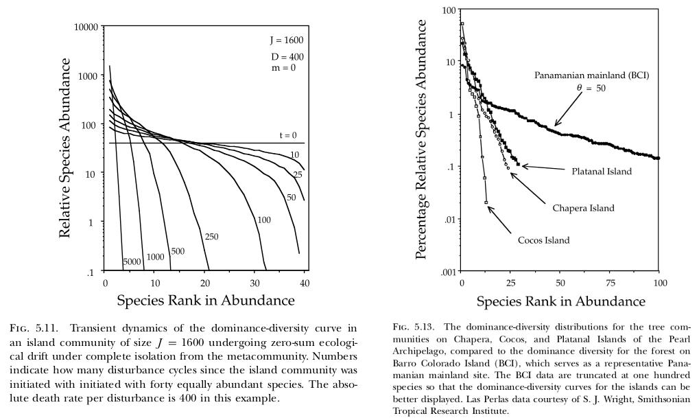 Transient dynamics in neutral models
